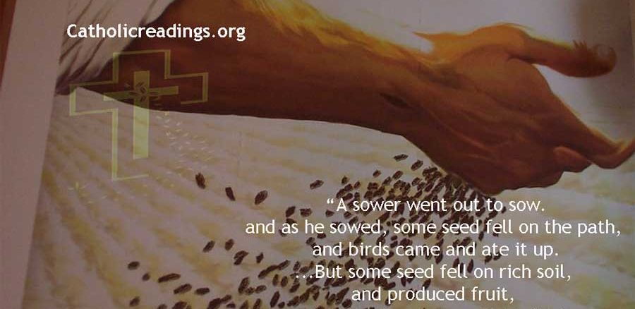 Seed Fell on Rich Soil and Produced Fruit - Bible Verse of the Day