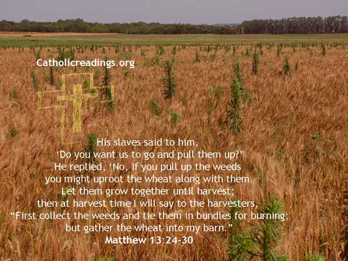 Parable of the Wheat and Tares (Weeds) - Bible Verse of the Day