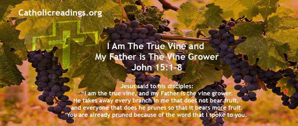 I Am The True Vine and My Father is The Vine Grower - John 15:1-8 - Bible Verse of the Day