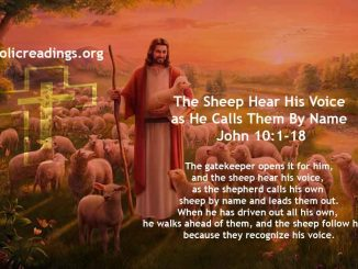 The Sheep Hear His Voice as He Calls Them By Name - John 10:1-18 - Bible Verse of the Day